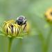 The bee! by fayefaye