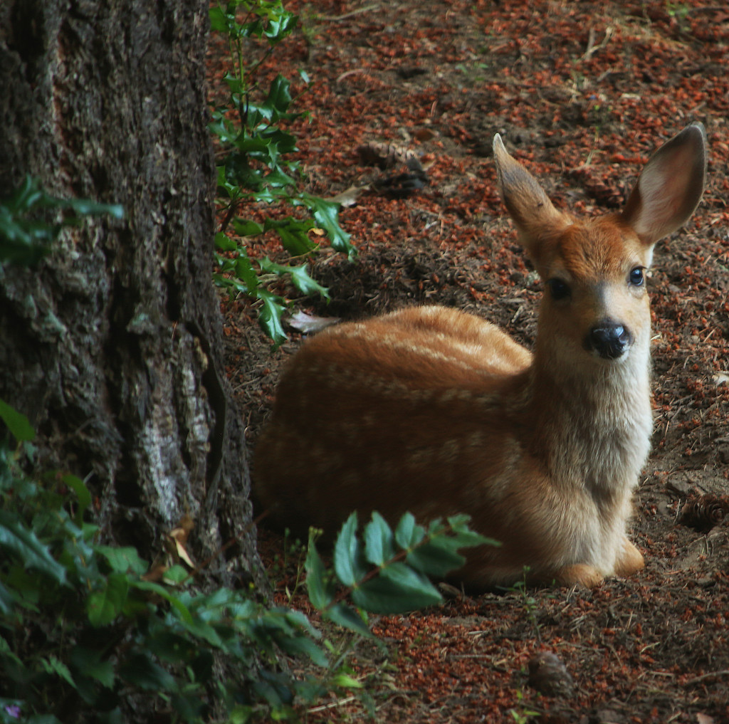 Fawn Baby One by nanderson