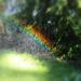 Sprinkler Rainbow by nanderson