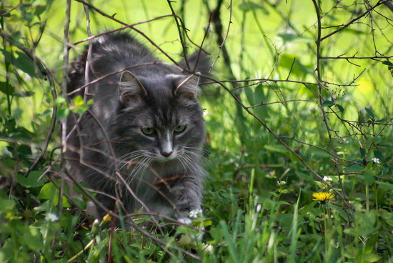 Exploring under the bush by mittens