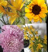 23rd Jul 2016 - Flowers grown in the Nilgiri hills