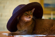 25th Jul 2016 - Sun hats needed