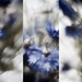 multilens cornflowers by pistache