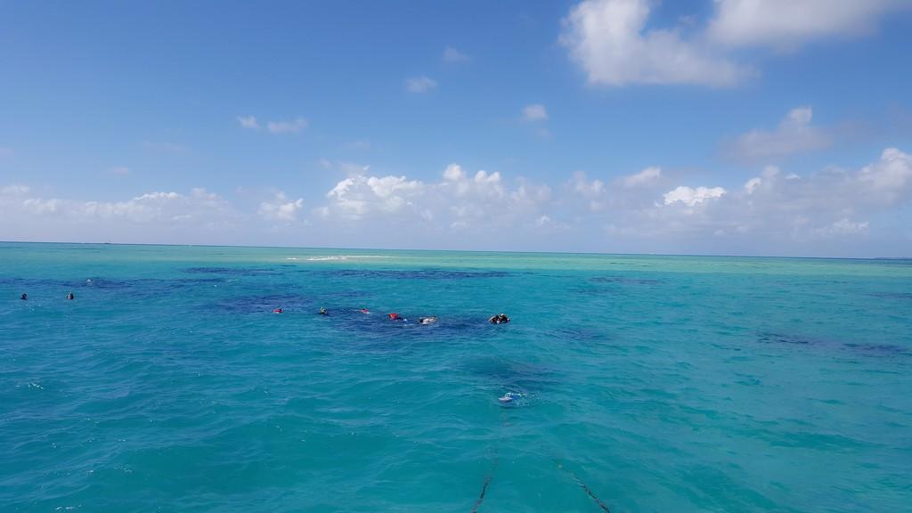 Great Barrier Reef Snorkeling by bambilee