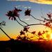 Sunrise over the Sunshine Coast by 777margo