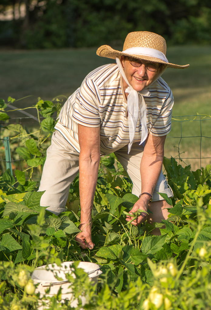 Gardening by dridsdale
