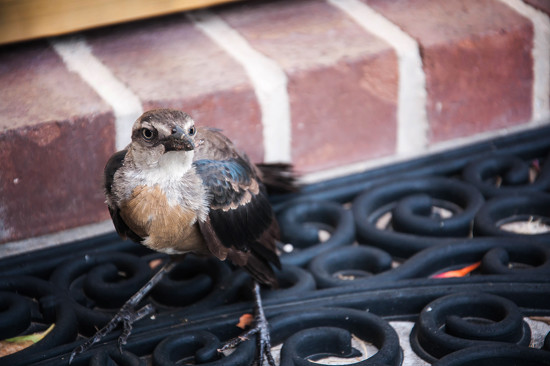 Front Porch Visitor by emrob