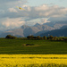 Yellow Plane over the Canola by salza