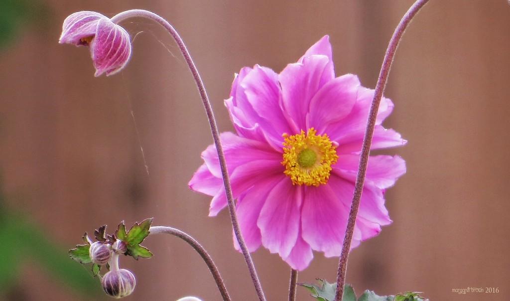 First flower by craftymeg