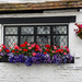 Summer flowers at The Old Coach House (a black background becomes it!) by ivan