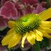 New Bloom by seattlite