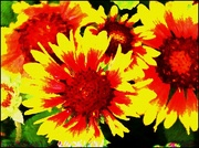 31st Jul 2016 - Flower Impressions