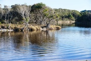 1st Aug 2016 - reflections at Stumers Creek