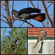 1st Aug 2016 - A Few Cooperative Birds _DSC8875
