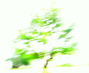 4th Aug 2016 - ICM tree