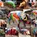 Pigs Gone Wild in Ipswich by bizziebeeme