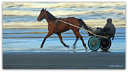 6th Aug 2016 - Trotter on beach