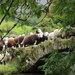 Herdwick bridge by callymazoo