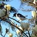 White Magnolia. by 777margo