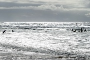 7th Aug 2016 - the kids are out surfing today