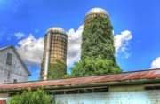 9th Aug 2016 - Silos with greenery