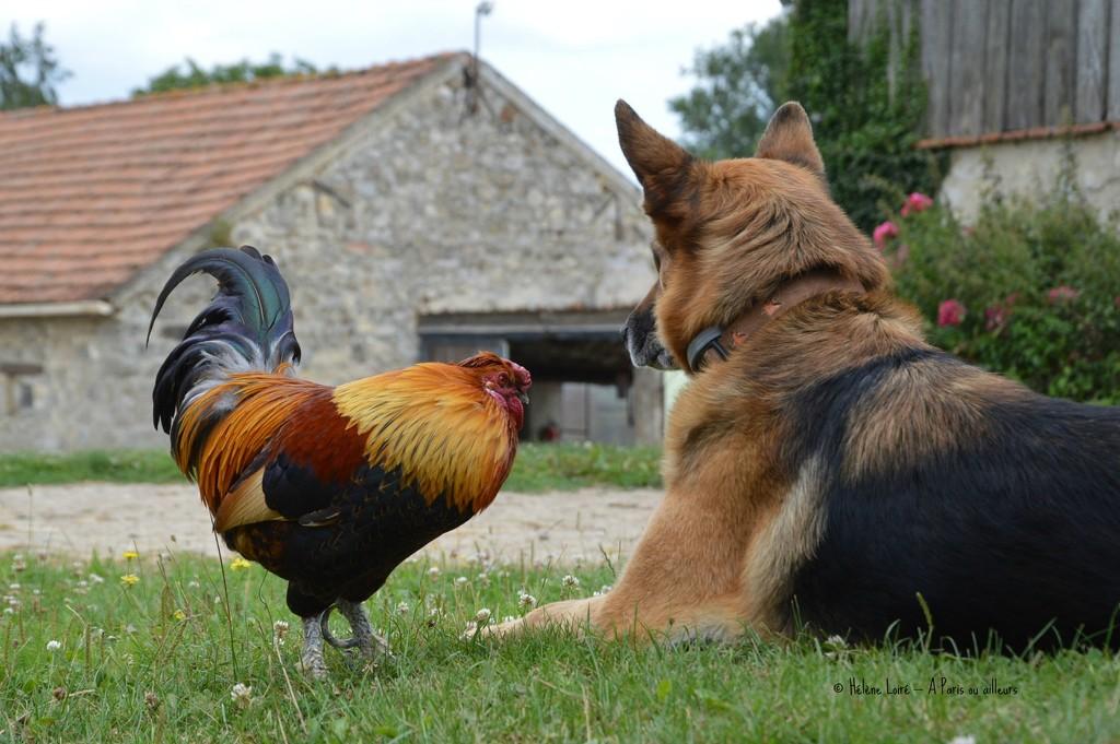 Friends by parisouailleurs