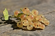 10th Aug 2016 - White Currant