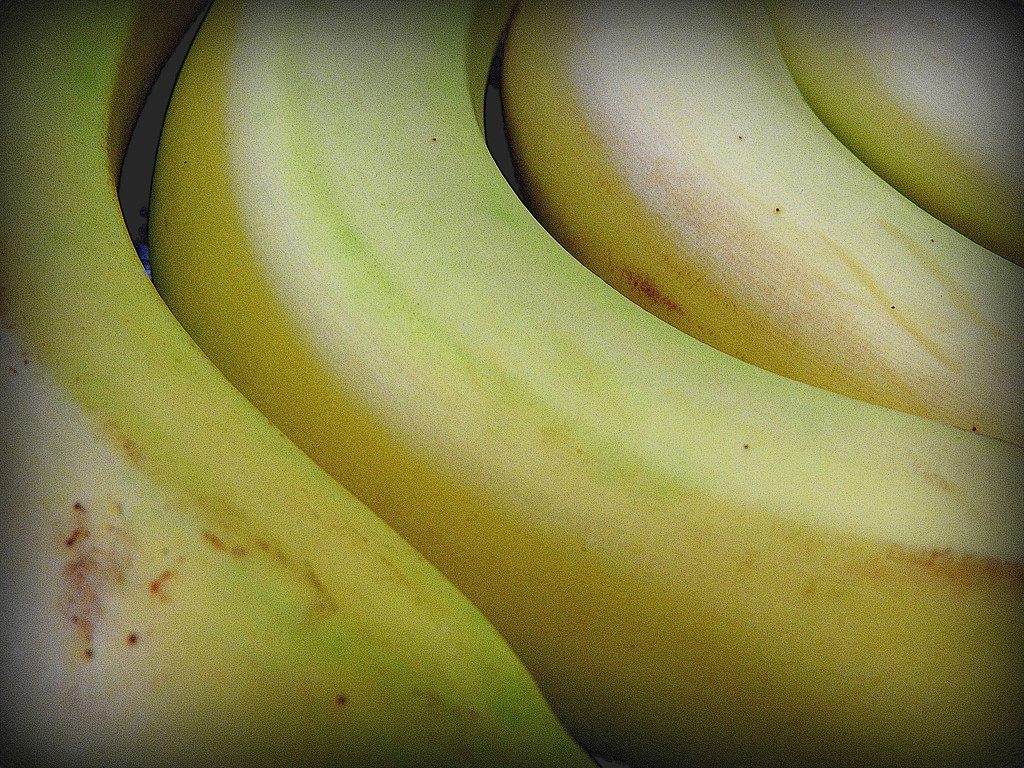That's just bananas! by homeschoolmom