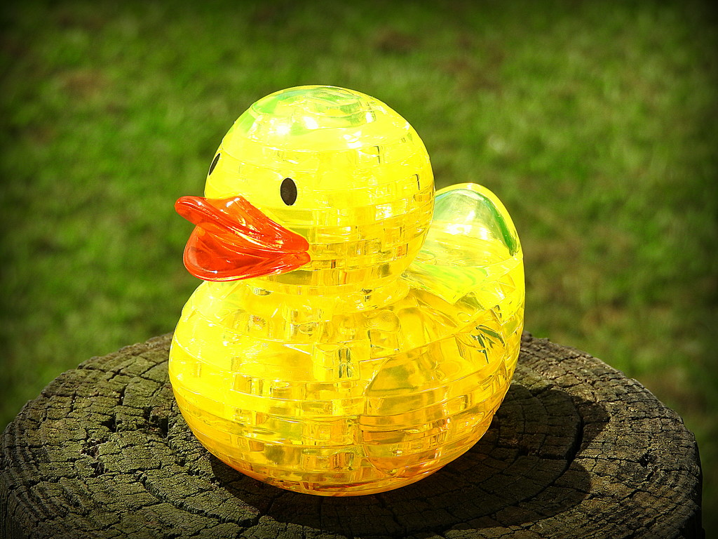 Ducky goes to the park! by homeschoolmom