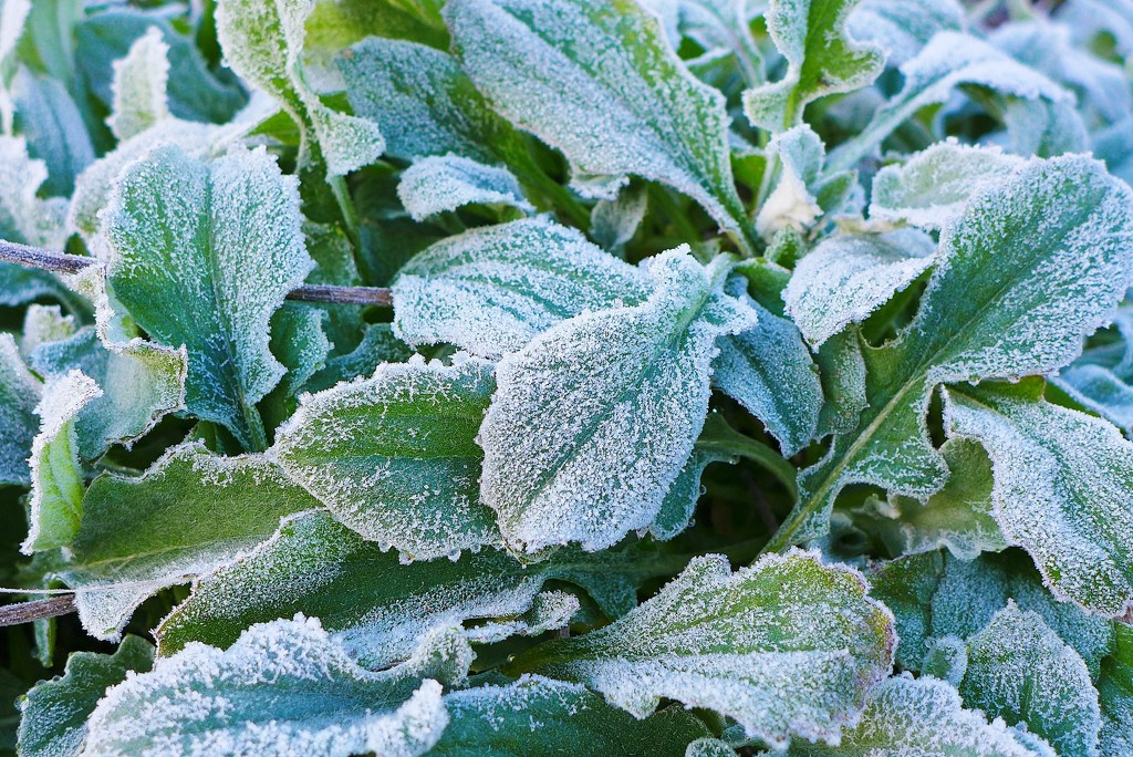 Another visit from Jack Frost by leggzy