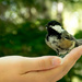 A bird in the hand............ by novab