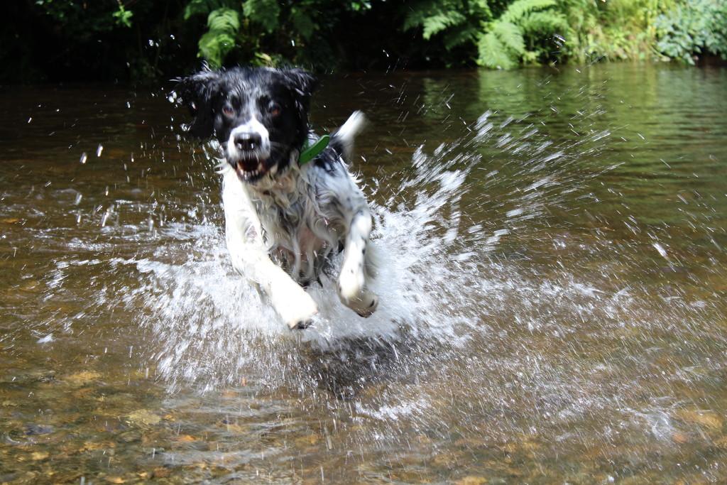 splash by flashphotography