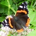 Red Admiral (Vanessa atalanta) by julienne1