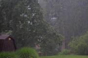 15th Aug 2016 - It's raining, it's pouring,