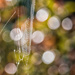 2016 08 15 Cobweb and bokeh by pamknowler