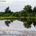 Reflections at Hammonasset Pond