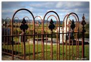 16th Aug 2016 - Waipipi Cemetery..