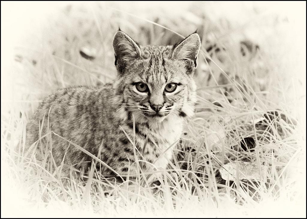 Kitty Kitty! by aikiuser
