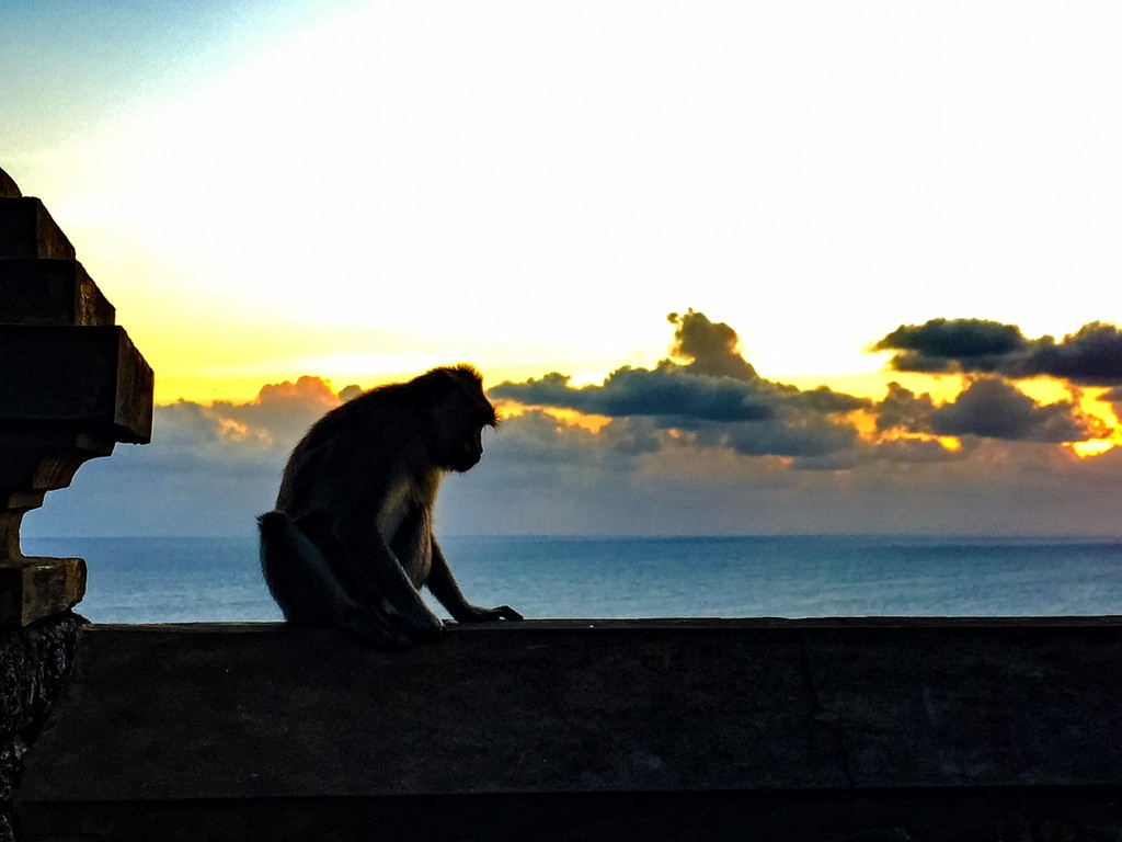A view for a monkey by cocobella
