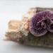 Small Purple Fungus