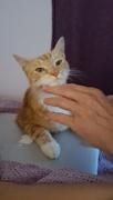 16th Aug 2016 - He's a cat super model