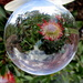 Protea through a crystal ball by 777margo