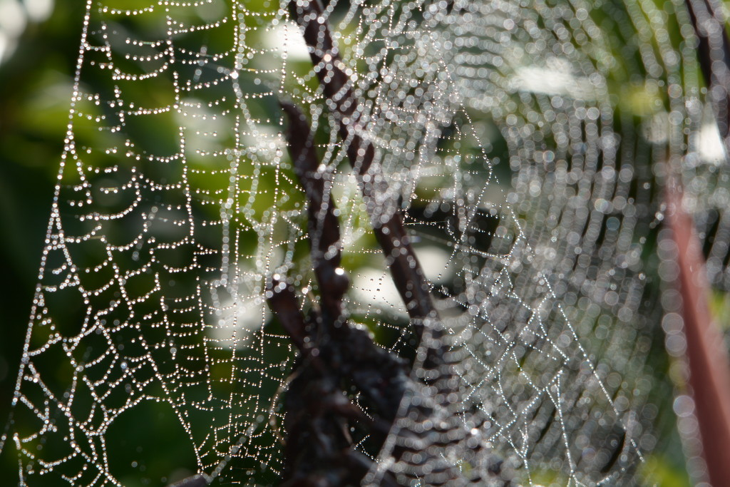 Web bokeh by ziggy77