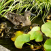 Another photo of these cute little ducklings. by snowy