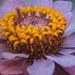 Ice Flower by rosiekerr