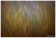 20th Aug 2016 - Abstract River Reeds...
