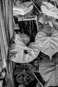 20th Aug 2016 - Leaves