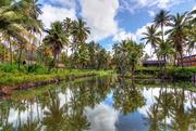 16th Jun 2016 - At the Coco Palms, Kauai, Hawaii