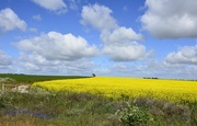 22nd Aug 2016 - More Fields of Colour....._DSC0677