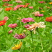 Field of flowers! by homeschoolmom